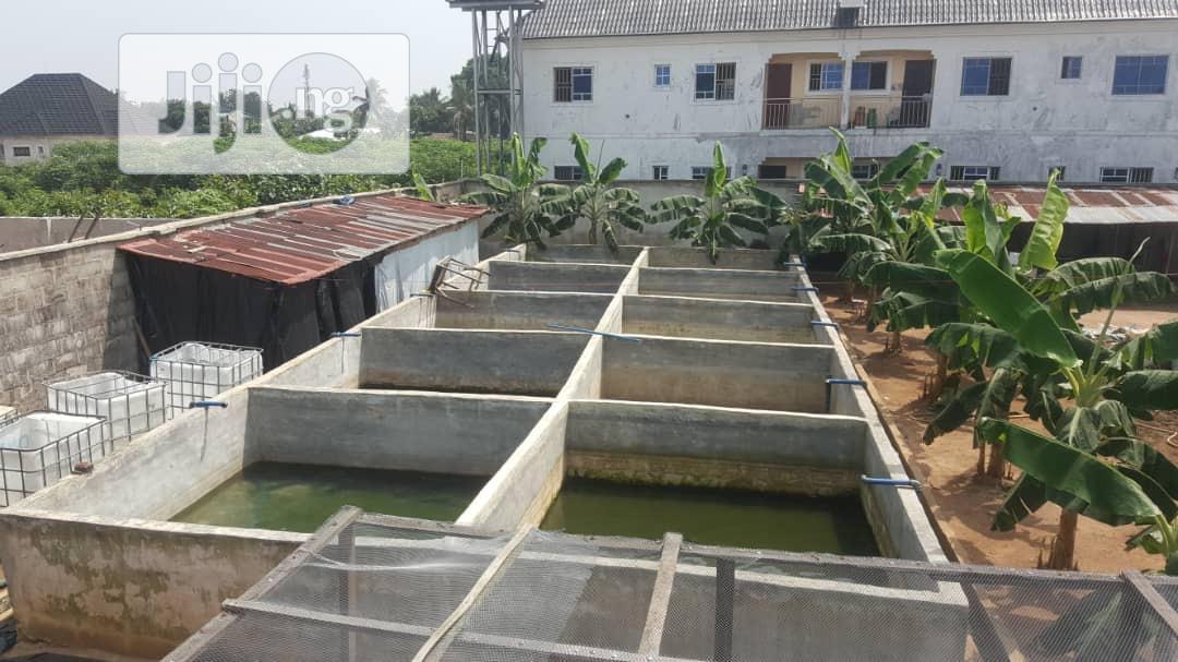 Fish Farm for Rent