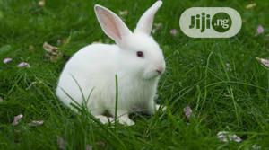 Rabbits for Sale   Livestock & Poultry for sale in Akwa Ibom State, Uyo