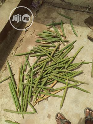 Moringa Seeds | Feeds, Supplements & Seeds for sale in Kwara State, Ifelodun-Kwara