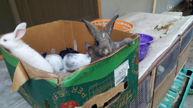 Healthy Rabbits