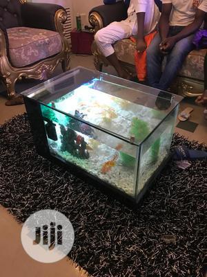 Aquarium Fishes and Fish Bowl | Fish for sale in Lagos State, Ikorodu