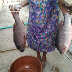 Fresh Fish   Meals & Drinks for sale in Lagos State, Kosofe