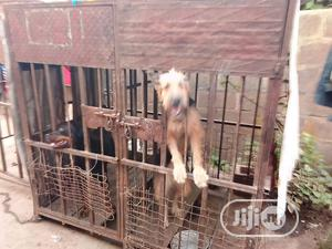 Dog Cage | Pet's Accessories for sale in Oyo State, Ibadan
