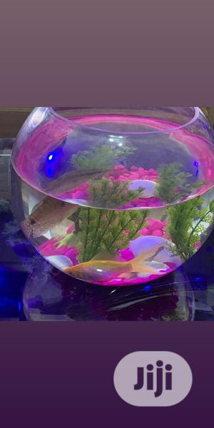 Exotic Fish Aquariums Bowls | Fish for sale in Oyo State, Ibadan