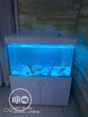 Colorful Aquarium | Fish for sale in Lagos State, Surulere