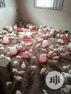 4 Weeks Broiler,Noiler And 6 Weeks Turkey Available For Sale | Livestock & Poultry for sale in Ondo State, Akure