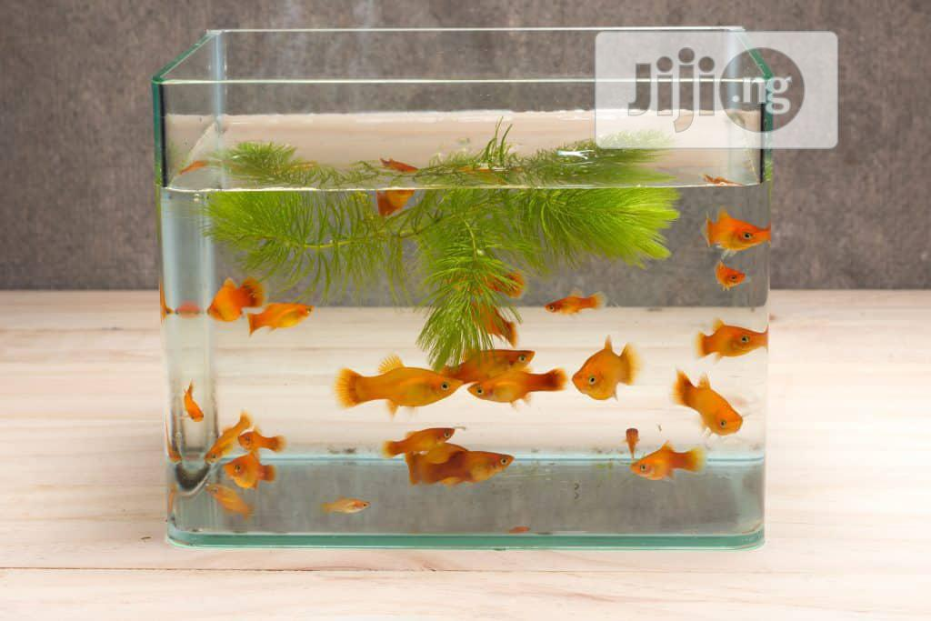 Glass Aquarium
