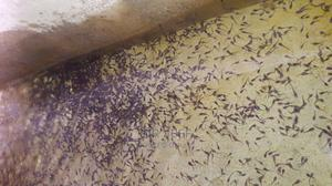 Catfish Hatchery Services | Other Services for sale in Abia State, Aba South