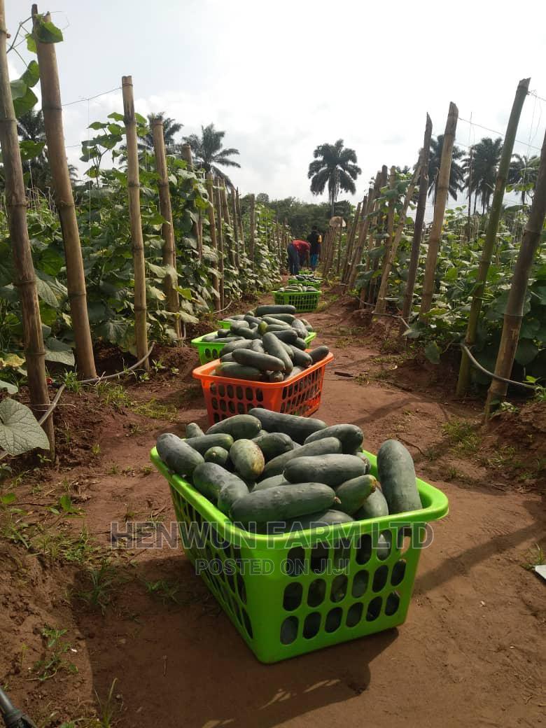 Archive: Farm Produce