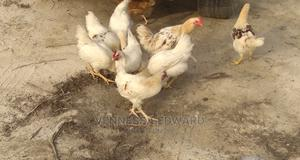 3kg Cockerel | Livestock & Poultry for sale in Lagos State, Epe