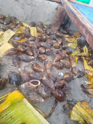 #1 Snail Production Farming in Nigeria   Other Animals for sale in Oyo State, Ibadan