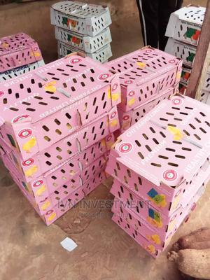 DOC (Day Old Chicks) and Day Old Poults   Livestock & Poultry for sale in Lagos State, Ikorodu