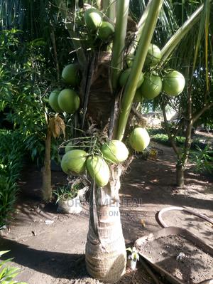 Affordable Dwarf Fruits | Garden for sale in Oyo State, Ibadan