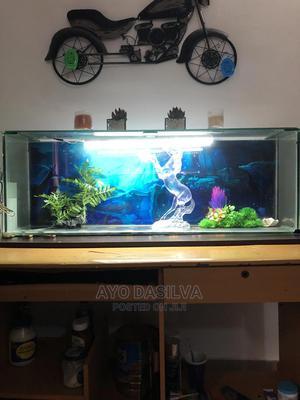 Aquarium For Sale. | Fish for sale in Lagos State, Lekki