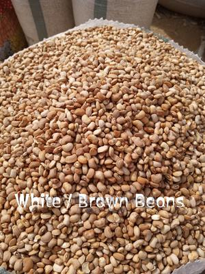 White and Red Beans Available in Tonnes   Meals & Drinks for sale in Lagos State, Ibeju