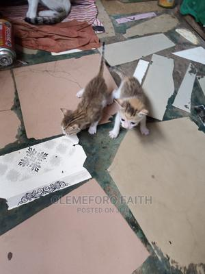 0-1 Month Female Mixed Breed Persian | Cats & Kittens for sale in Imo State, Owerri