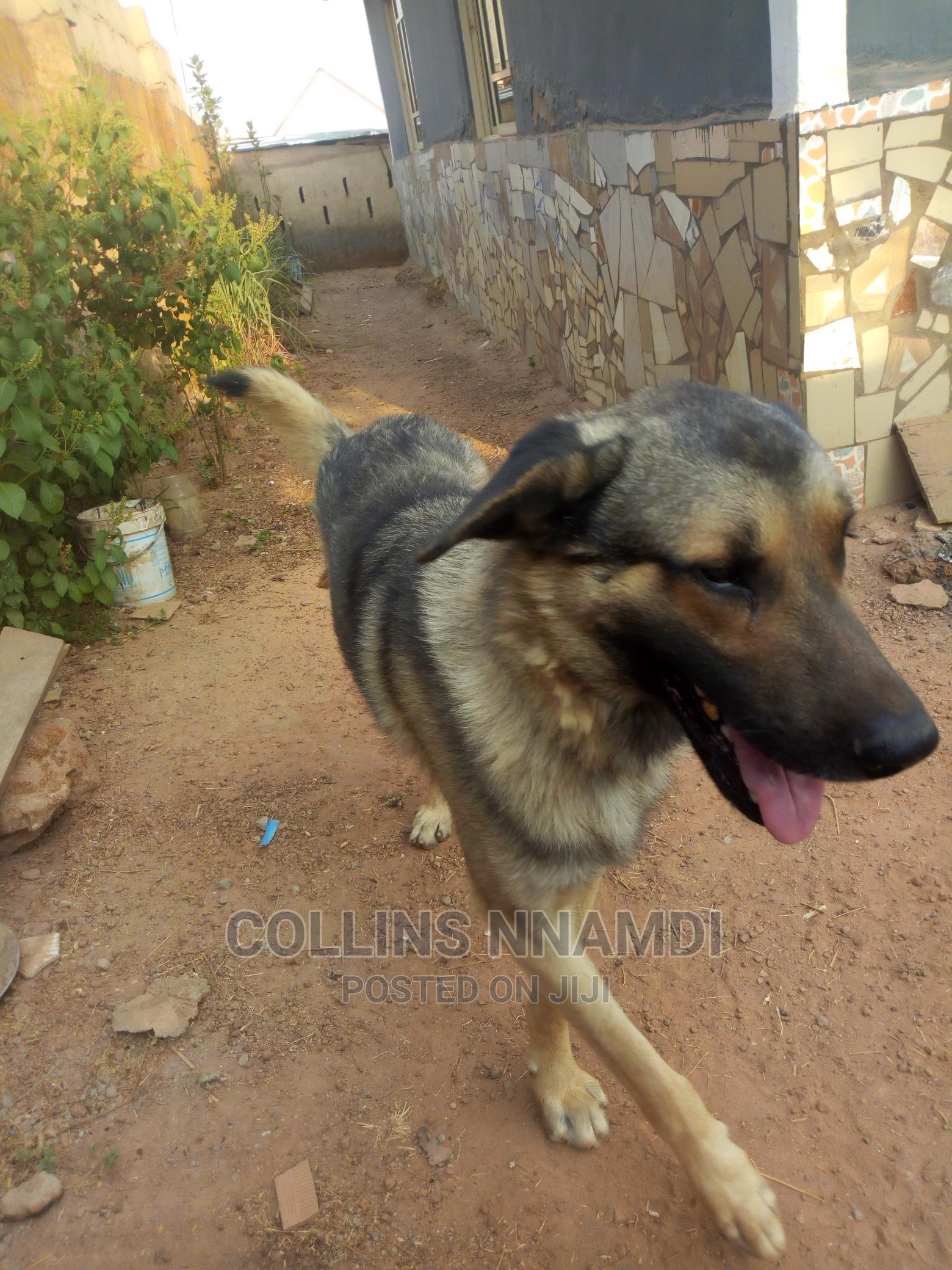 GSD for Crossing/Stud