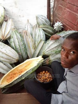 Broad Leaf Ugu Pod | Feeds, Supplements & Seeds for sale in Anambra State, Onitsha