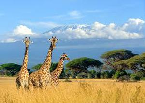 No Deposit Kenya, Ethiopia and Zimbabwe Visa   Travel Agents & Tours for sale in Lagos State, Lagos Island (Eko)