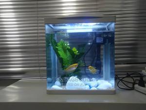 Mini Aquarium   Fish for sale in Lagos State, Ikeja