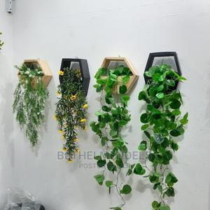 Wall Creeping Plant | Garden for sale in Lagos State, Ikeja