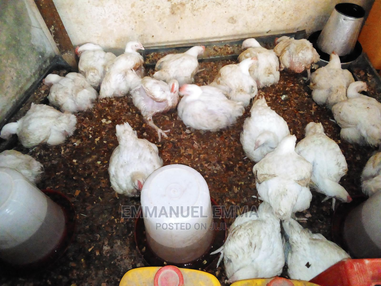 Broiler Chicken | Livestock & Poultry for sale in Enugu / Enugu, Enugu State, Nigeria
