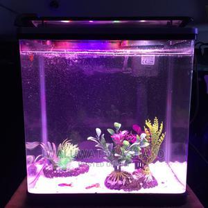Curve Mini Aquarium   Fish for sale in Lagos State, Victoria Island