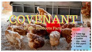 Poultry Work Attendant Needed | Farming & Veterinary Jobs for sale in Oyo State, Ibadan