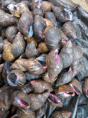 #1 Snail Production Farmer in Nigeria   Other Animals for sale in Ogun State, Abeokuta South