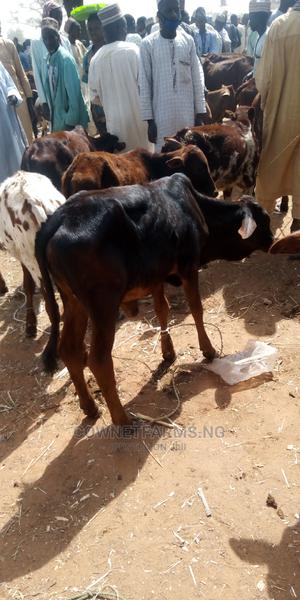 Calf for Rearing Only( on Request Only) | Livestock & Poultry for sale in Lagos State, Gbagada