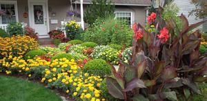 Easter Flowers/Easter Lilies/Canna Lilies | Feeds, Supplements & Seeds for sale in Lagos State, Ifako-Ijaiye