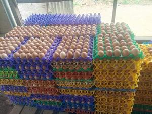 Poultry Eggs For Sale   Meals & Drinks for sale in Lagos State, Ikorodu