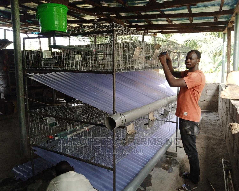 Rabbit Housing (Large Farms)