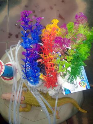 Aquarium Article Plants | Fish for sale in Oyo State, Ibadan