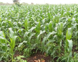 Sweet Corn and Cucumbers | Meals & Drinks for sale in Lagos State, Ajah