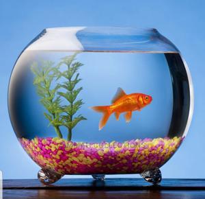 Fish Bowl Aquarium's | Fish for sale in Lagos State, Ikoyi