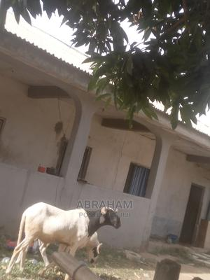 White Ram/Sheep   Livestock & Poultry for sale in Kwara State, Ilorin West