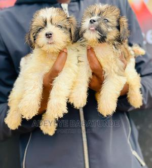 1-3 Month Female Purebred Lhasa Apso | Dogs & Puppies for sale in Oyo State, Ibadan