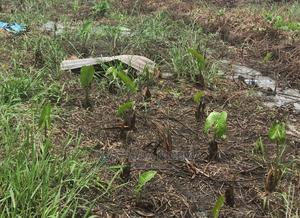 Cheapest 600sqm Land for Sale at Awuse Estate, Opebi Ikeja | Land & Plots For Sale for sale in Lagos State, Ikeja