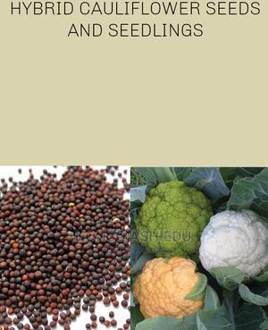 Hybrid Cauliflower Seedlings | Feeds, Supplements & Seeds for sale in Lagos State, Ojo