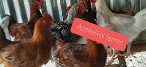 Matured Cockerels and Broilers for Sale Kubwa Abuja | Livestock & Poultry for sale in Abuja (FCT) State, Kubwa