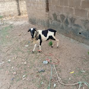 Very Big Heathy And Strong Ram For Sale   Livestock & Poultry for sale in Ogun State, Abeokuta South
