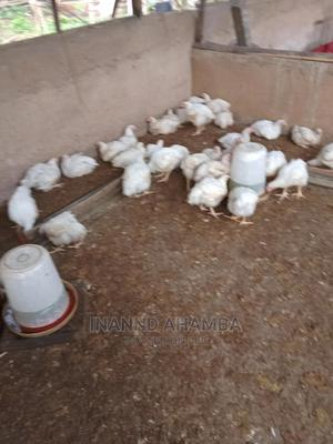 Mature Broiler (Life Weight 2.5kg and Above) | Livestock & Poultry for sale in Imo State, Owerri