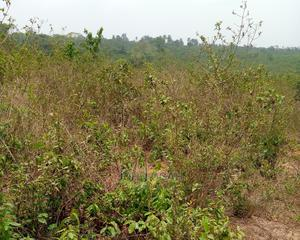 Registered Survey and Receipt | Land & Plots For Sale for sale in Imo State, Okigwe
