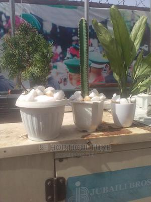 Potted Plants | Landscaping & Gardening Services for sale in Lagos State, Victoria Island