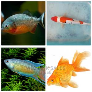 Sets of Aquarium Fishes in Stock | Fish for sale in Lagos State, Surulere
