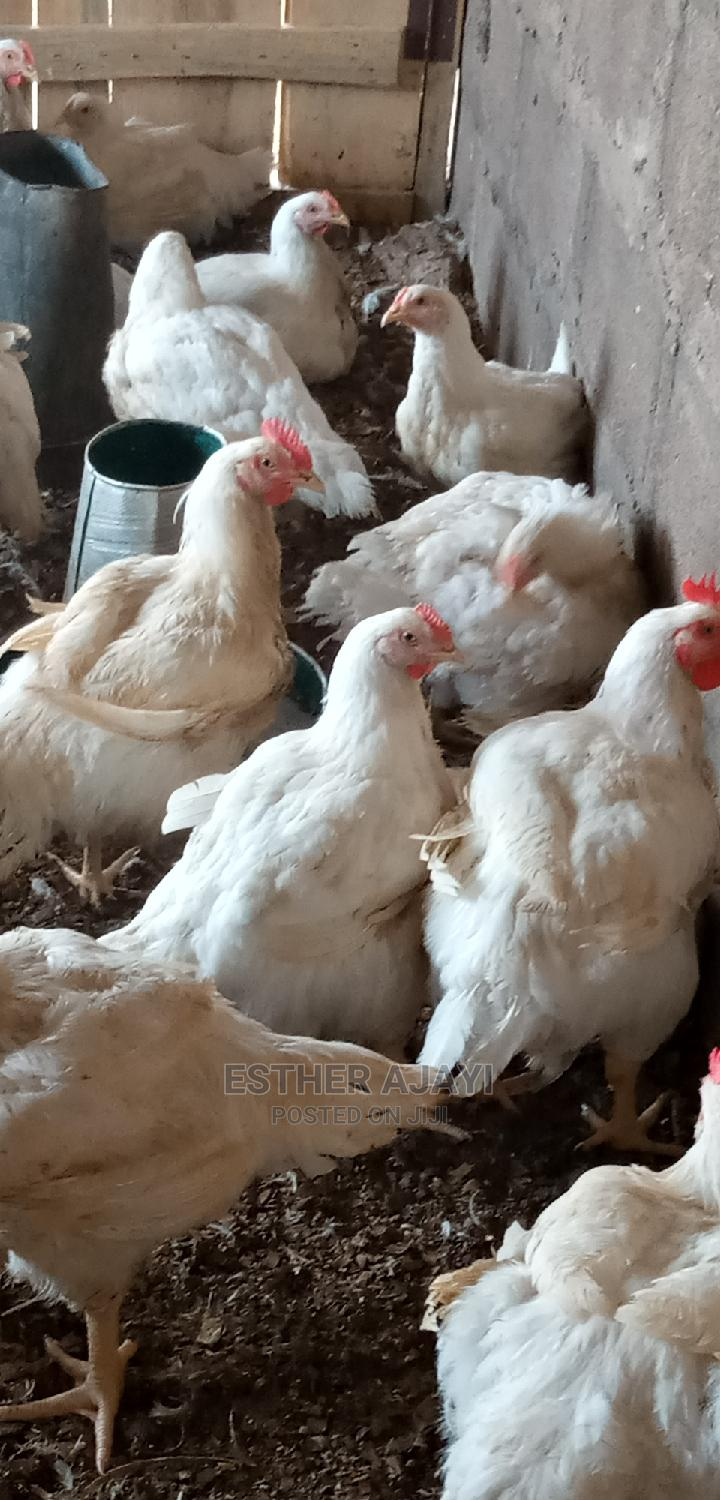 Healthy Broiler Chicken for Sale | Livestock & Poultry for sale in Abeokuta North, Ogun State, Nigeria