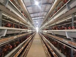 China Battery Cage   Farm Machinery & Equipment for sale in Oyo State, Oyo