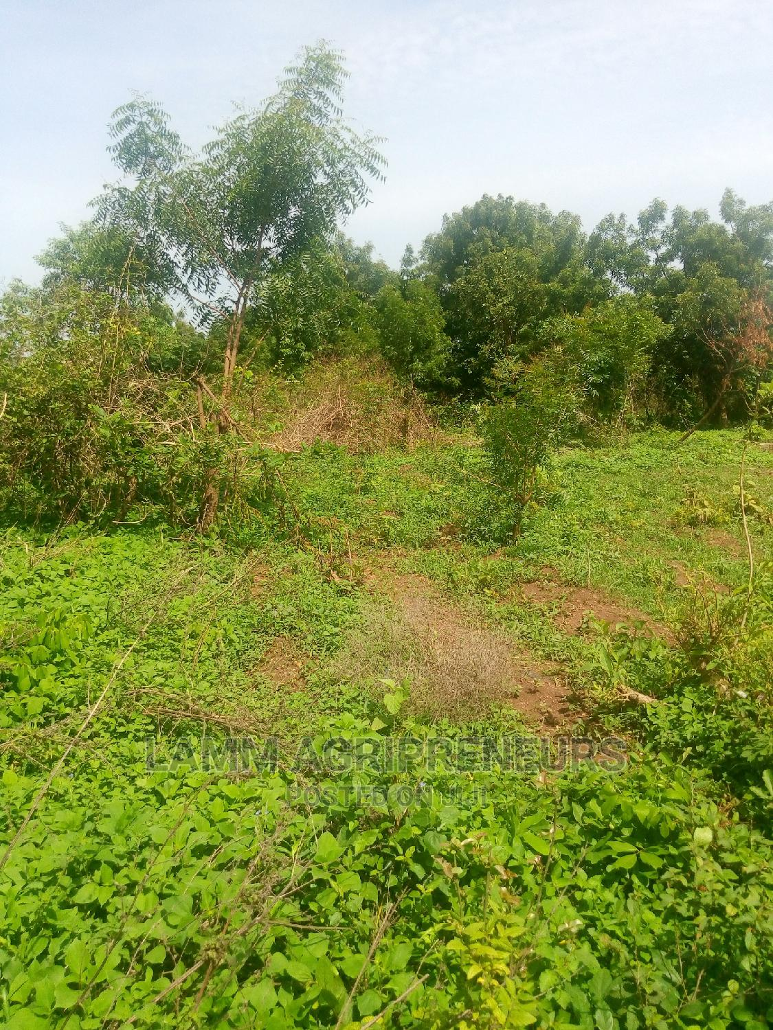 Archive: Acres Of Farmland For Sale/Lease In Iseyin , Oyo State