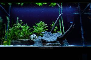 Aquarium Unit | Fish for sale in Lagos State, Ikoyi